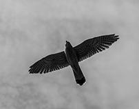Belgrade Birdwatching