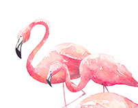 Flamingos, watercolor