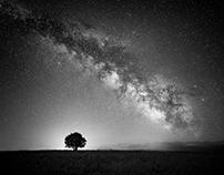 In the luminance of night
