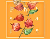 Identidade visual - Physalis