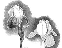 Herbarium of the artist