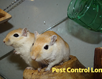 5 Reason Mouse Will Increase in Your House