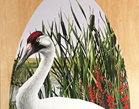 Reintroduction I (Whooping Crane)