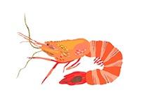 IPAD Drawings: Adobe Illustrator Draw / Tiger Shrimp