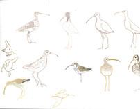 Vogelboulevard