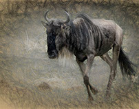 A Day in the Life of Eric the Gnu