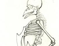 Bone Studies