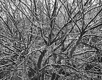 Tennessee Winterland Tree Freeze 2015.