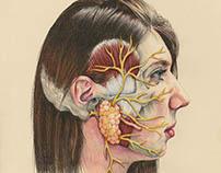 Facial Nerve Branches