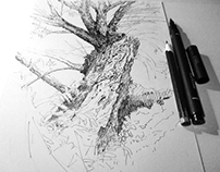 Trees - drawings