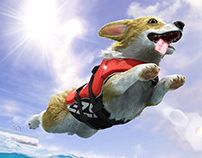 Flying Corgi