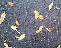 Autumn pavement Melbourne
