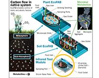 EcoFAB Carbon Flow Figure Illustration