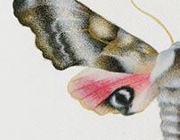 night butterfly - Watercolors