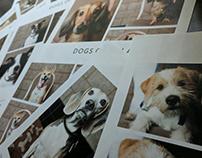 Dogs of Delano 2017 Calendar