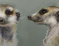 Meerkat 𝑆𝑢𝑟𝑖𝑐𝑎𝑡𝑎 𝑠𝑢𝑟𝑖𝑐𝑎𝑡𝑡𝑎
