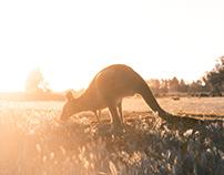 A Tour of Australia