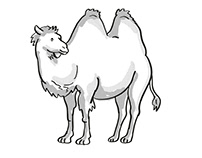 Bactrian Camel or Camelus Bactrianus Endangered Wildlif