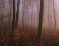 FOGGY FOREST, Germany