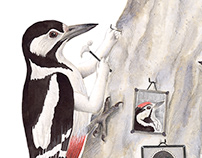Birds illustration - Pico picapinos