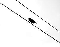 About Brazilian Birds.