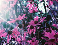 Yellow Flowers Shot with Purple Film