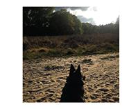 natuur samen met hond