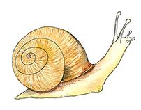 Snail GIF