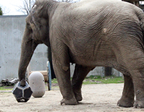 Elephant Enrichment