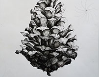 Fir cone - Ink