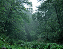 The atmosphere of the Carpathian forests.