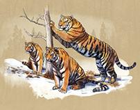 The Minnesota Zoo | Tiger Base Camp