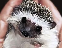 Hedgehog study