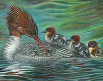 Merganser Mother Duck Stamp