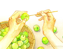 Making process of Japanese plum wine