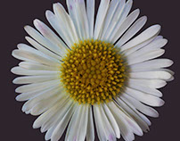 The Daisy project