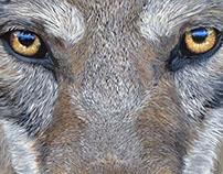 Wolf - 2016