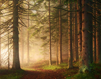 The Last Fairytale Forest