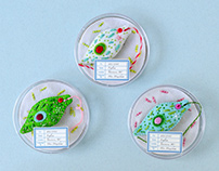 Euglena brooches