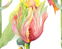 Watercolor botanical illustration of a parrot tulip.