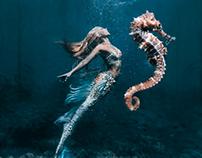 Mermaid's seahorse