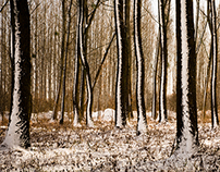 -Winter Forest-