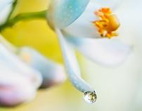MACRO spring bloom