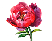 Watercolor painting tutorial flowers Peony