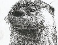 Eurasian Otter 𝐿𝑢𝑡𝑟𝑎 𝑙𝑢𝑡𝑟𝑎