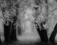 -Dark forest -