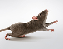 Boecker - Pest control