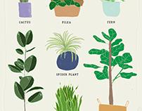 Hand Drawn Plants Poster