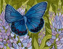 Karner Blue Butterfly Conservation Illustration