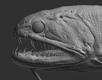 Barbatum Fish